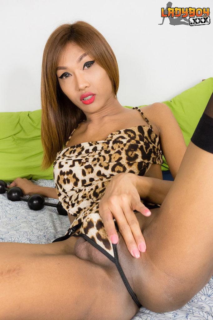 xxx porno asian ladyboy bilder